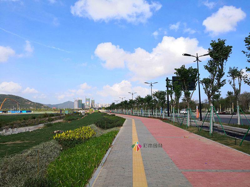 珠海项目道路绿化工程...