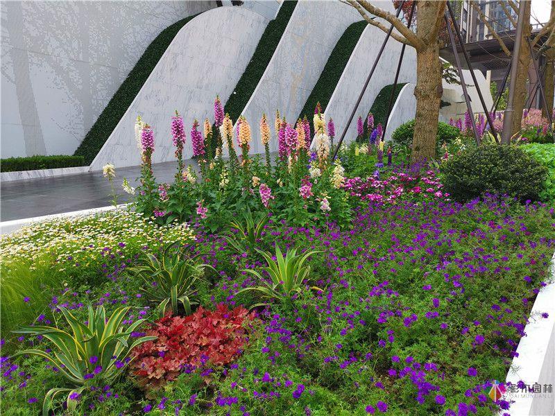 花境园艺设计实际效果图2