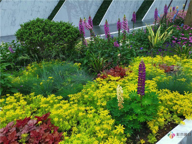 花境园艺设计实际效果图5