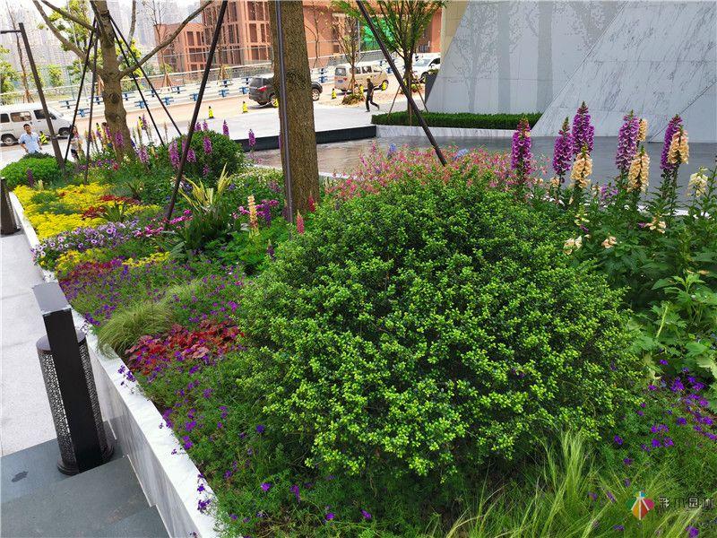 花境园艺设计实际效果图6