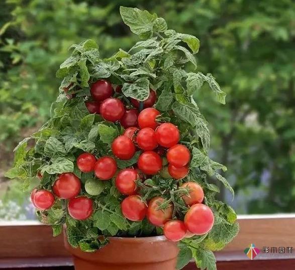 15个容器蔬菜花园设计看得我真的好想要!