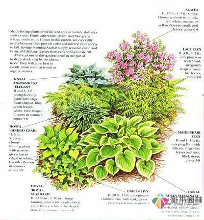 绘画花境设计对植物总是表现的四方面