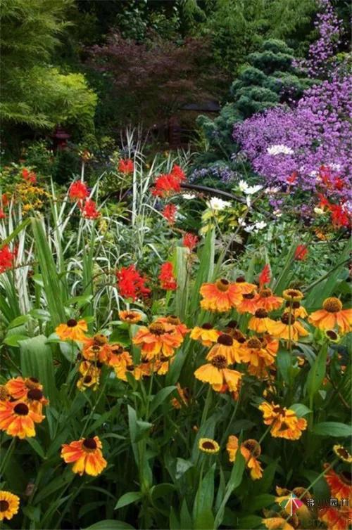 花境设计——呈现植物之美